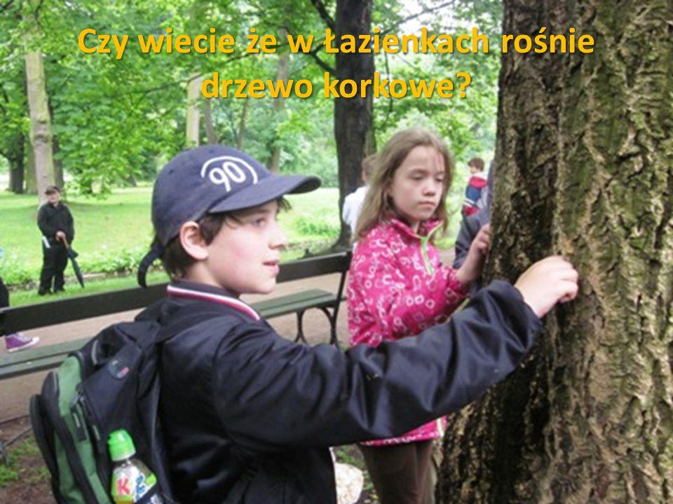 Czy wiecie że w Łazienkach rośnie drzewo korkowe