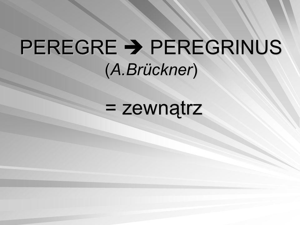 PEREGRE  PEREGRINUS (A.Brückner)