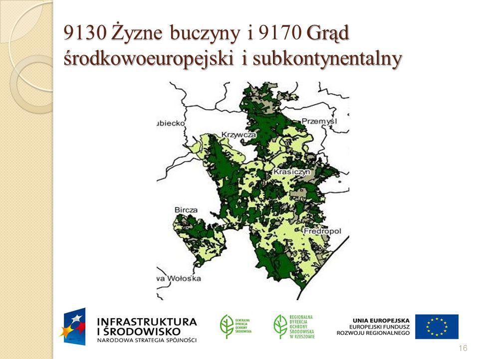 9130 Żyzne buczyny i 9170 Grąd środkowoeuropejski i subkontynentalny