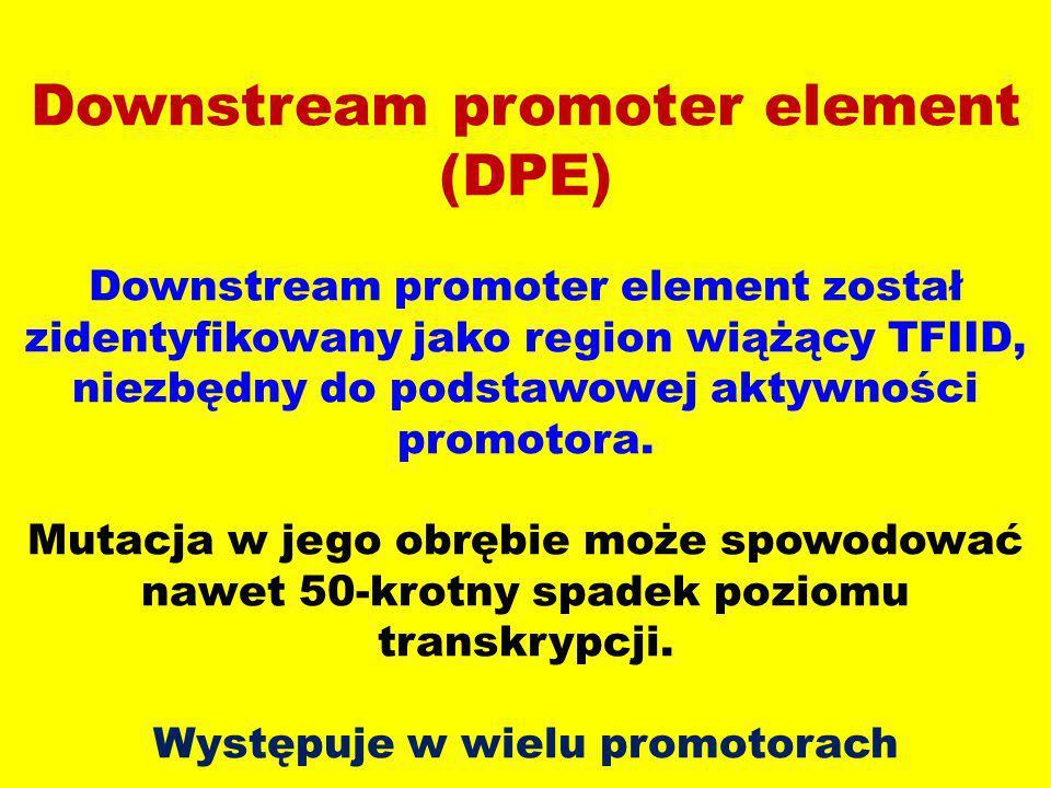 Downstream promoter element (DPE) Downstream promoter element został zidentyfikowany jako region wiążący TFIID, niezbędny do podstawowej aktywności promotora.