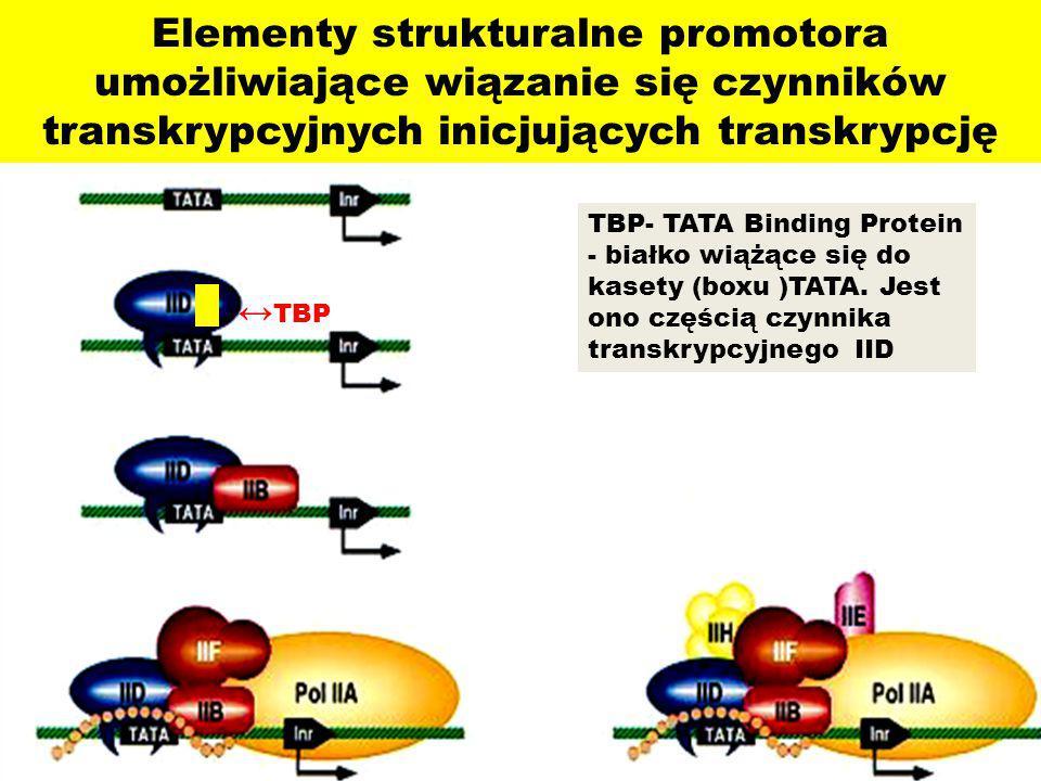 Elementy strukturalne promotora umożliwiające wiązanie się czynników transkrypcyjnych inicjujących transkrypcję