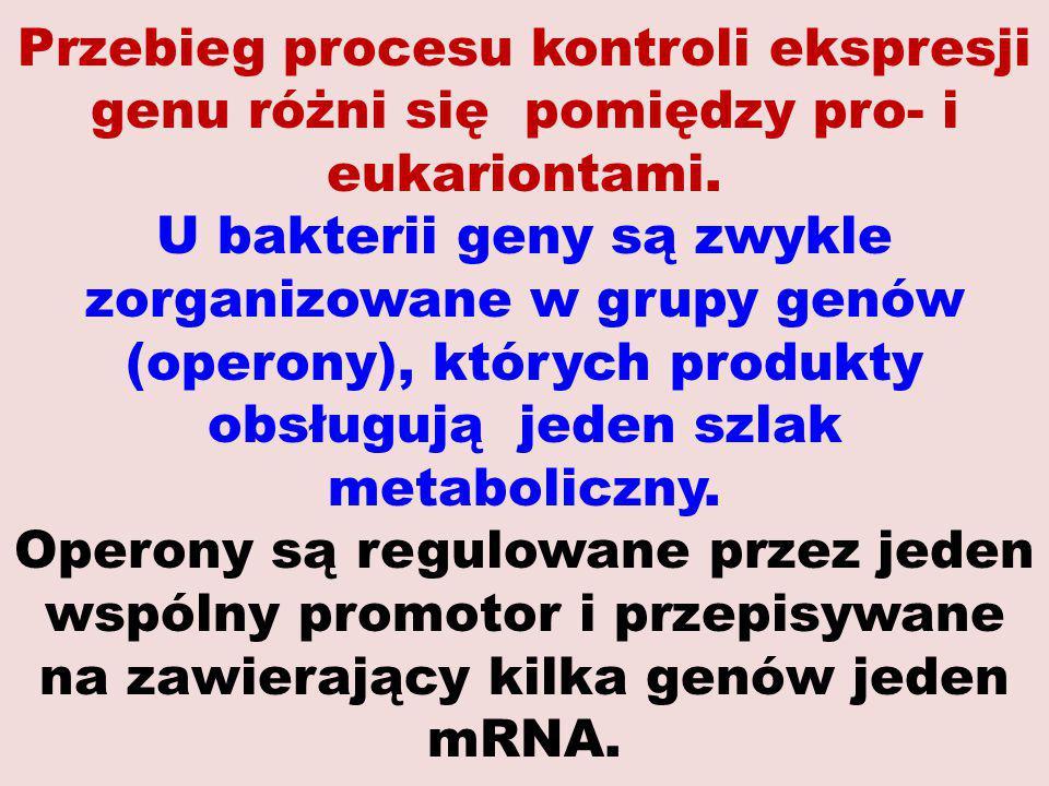 Przebieg procesu kontroli ekspresji genu różni się pomiędzy pro- i eukariontami.