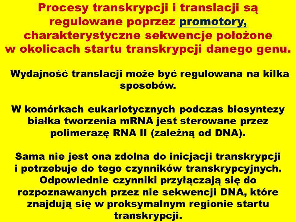 Procesy transkrypcji i translacji są regulowane poprzez promotory, charakterystyczne sekwencje położone w okolicach startu transkrypcji danego genu.