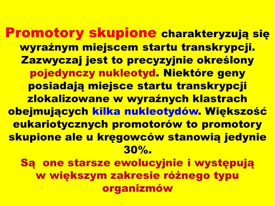 Promotory skupione charakteryzują się wyraźnym miejscem startu transkrypcji.