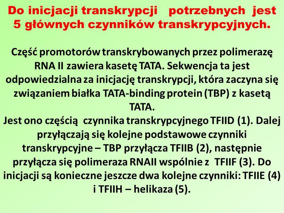 Do inicjacji transkrypcji potrzebnych jest 5 głównych czynników transkrypcyjnych.
