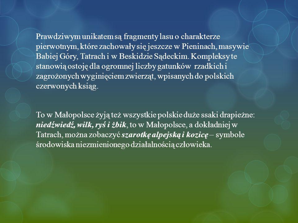Prawdziwym unikatem są fragmenty lasu o charakterze pierwotnym, które zachowały się jeszcze w Pieninach, masywie Babiej Góry, Tatrach i w Beskidzie Sądeckim. Kompleksy te stanowią ostoję dla ogromnej liczby gatunków rzadkich i zagrożonych wyginięciem zwierząt, wpisanych do polskich czerwonych ksiąg.
