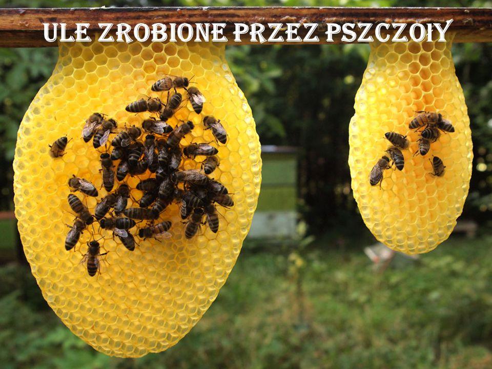 Ule zrobione przez pszczoły