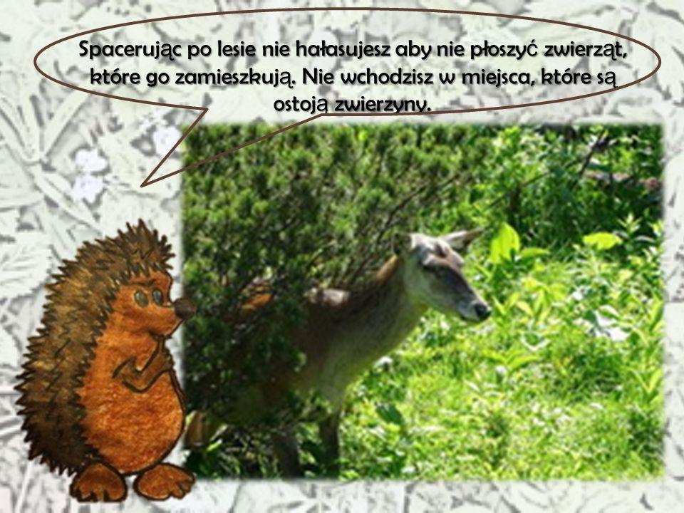 Spacerując po lesie nie hałasujesz aby nie płoszyć zwierząt, które go zamieszkują.