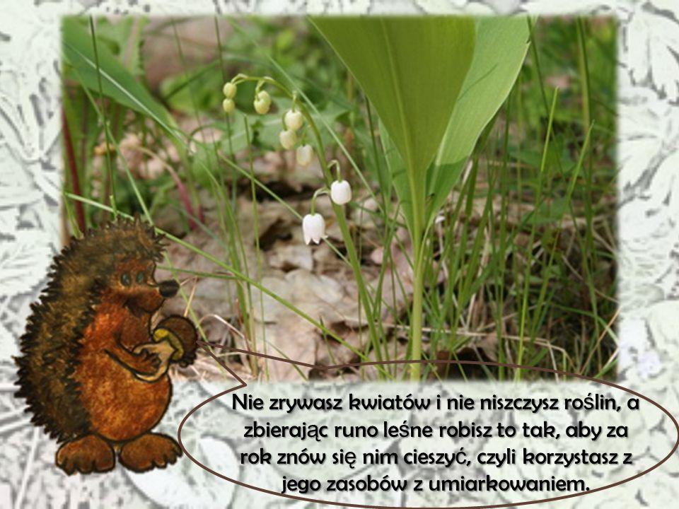 Nie zrywasz kwiatów i nie niszczysz roślin, a zbierając runo leśne robisz to tak, aby za rok znów się nim cieszyć, czyli korzystasz z jego zasobów z umiarkowaniem.