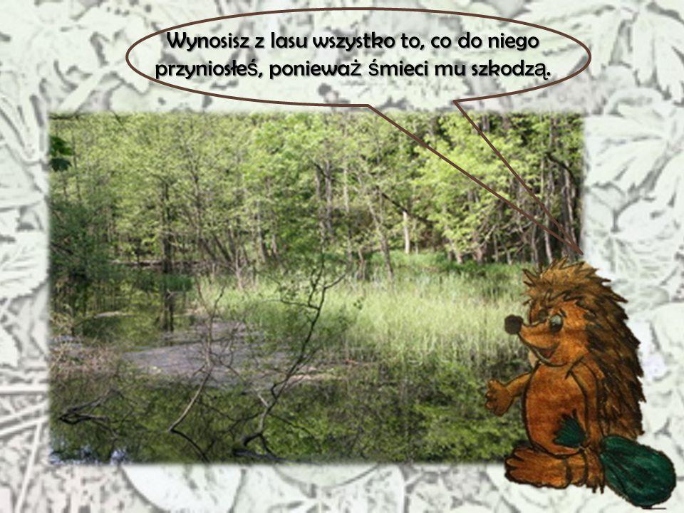 Wynosisz z lasu wszystko to, co do niego przyniosłeś, ponieważ śmieci mu szkodzą.