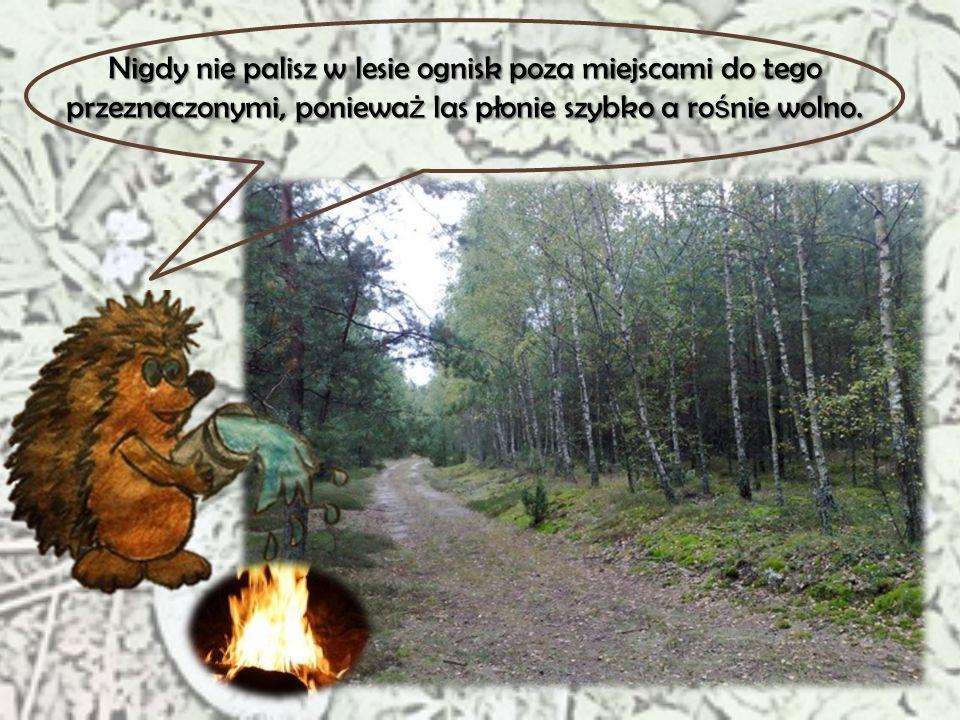 Nigdy nie palisz w lesie ognisk poza miejscami do tego przeznaczonymi, ponieważ las płonie szybko a rośnie wolno.