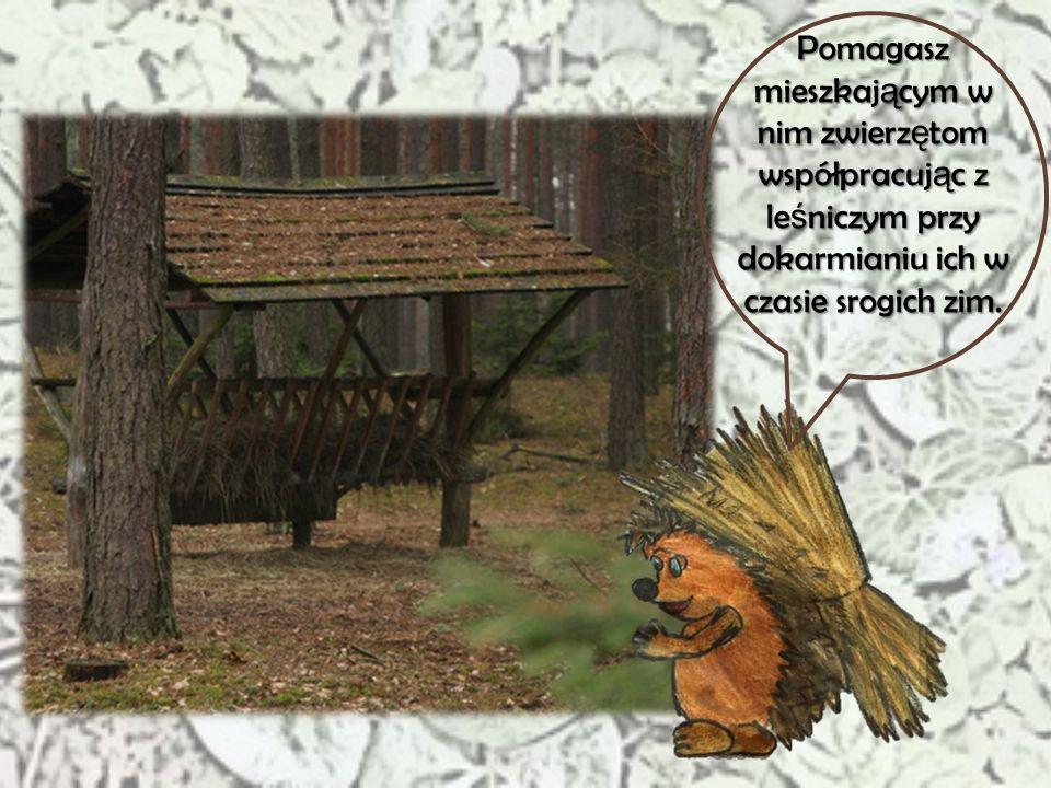 Pomagasz mieszkającym w nim zwierzętom współpracując z leśniczym przy dokarmianiu ich w czasie srogich zim.