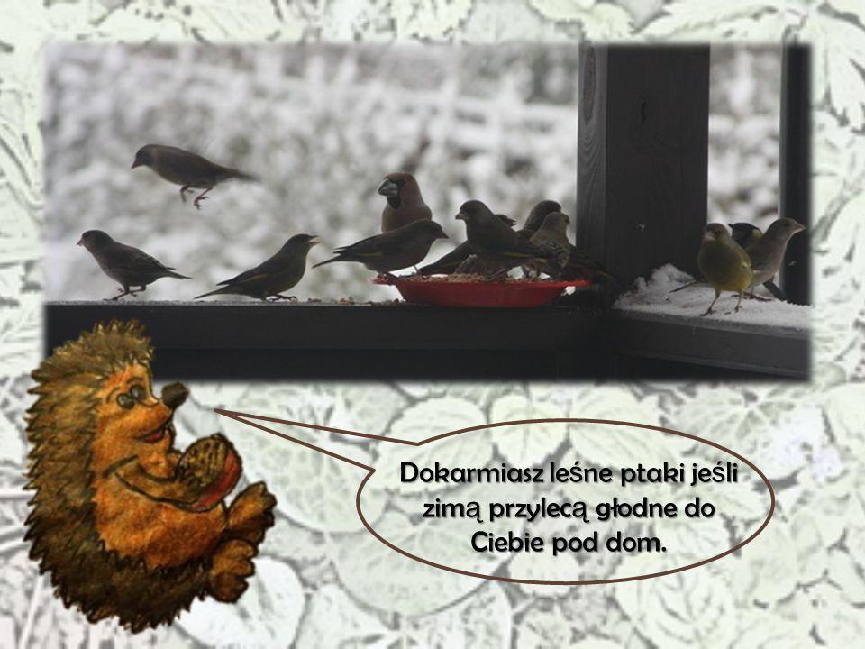 Dokarmiasz leśne ptaki jeśli zimą przylecą głodne do Ciebie pod dom.
