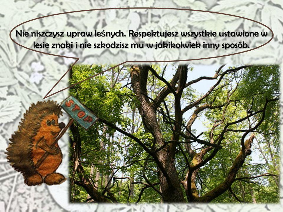Nie niszczysz upraw leśnych