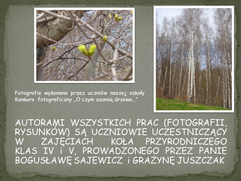 """Fotografie wykonane przez uczniów naszej szkoły Konkurs fotograficzny """"O czym szumią drzewa…"""