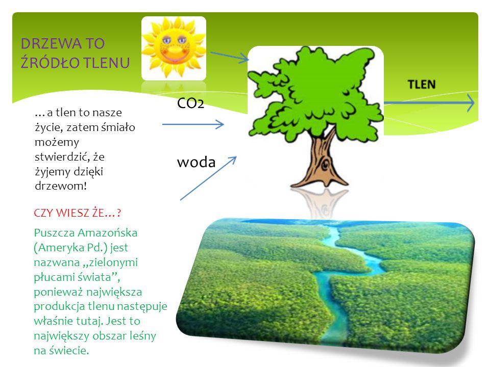 DRZEWA TO ŹRÓDŁO TLENU CO2 woda
