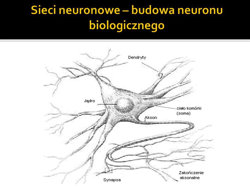 Sieci neuronowe – budowa neuronu biologicznego