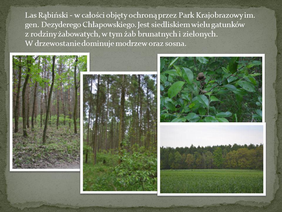Las Rąbiński - w całości objęty ochroną przez Park Krajobrazowy im. gen. Dezyderego Chłapowskiego. Jest siedliskiem wielu gatunków
