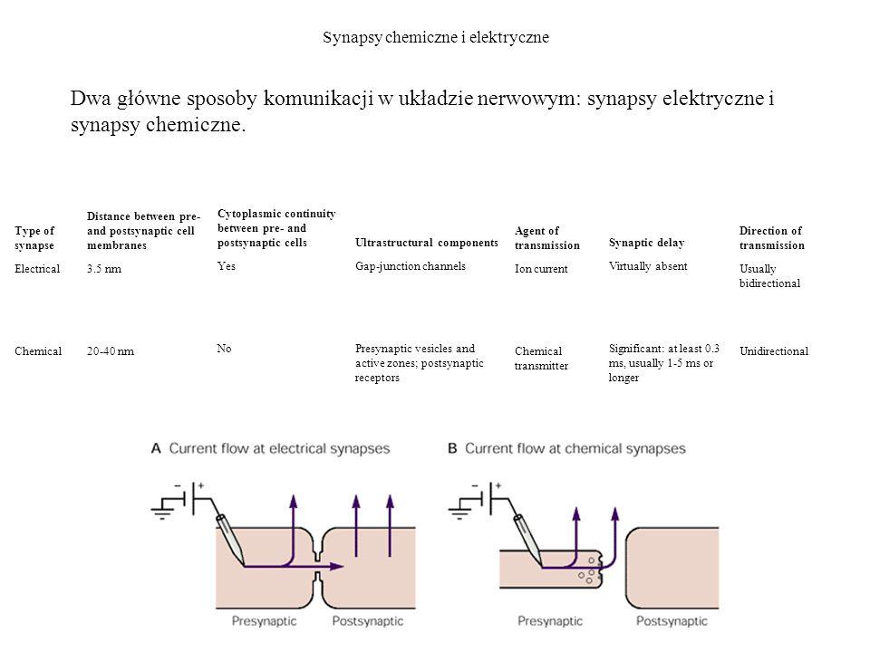 Synapsy chemiczne i elektryczne