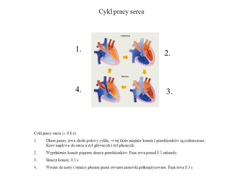 1. 2. 4. 3. Cykl pracy serca Cykl pracy serca (~ 0.8 s):