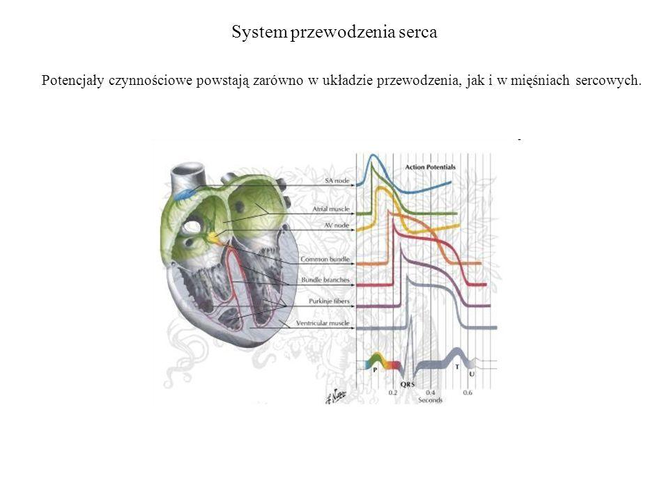 System przewodzenia serca