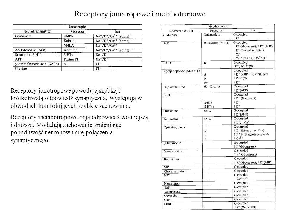 Receptory jonotropowe i metabotropowe