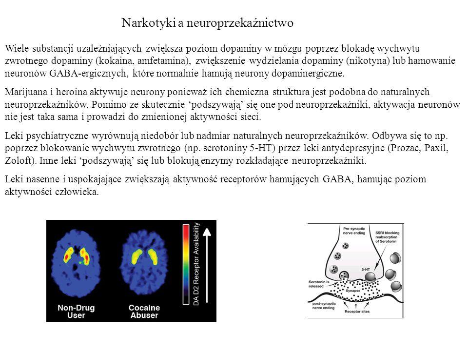 Narkotyki a neuroprzekaźnictwo