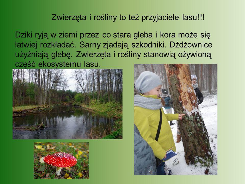 Zwierzęta i rośliny to też przyjaciele lasu!!!