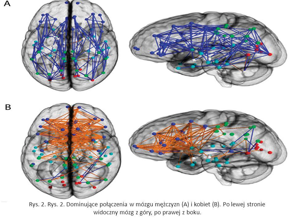 Rys. 2. Rys. 2. Dominujące połączenia w mózgu mężczyzn (A) i kobiet (B).