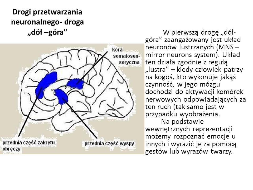 """Drogi przetwarzania neuronalnego- droga """"dół –góra"""