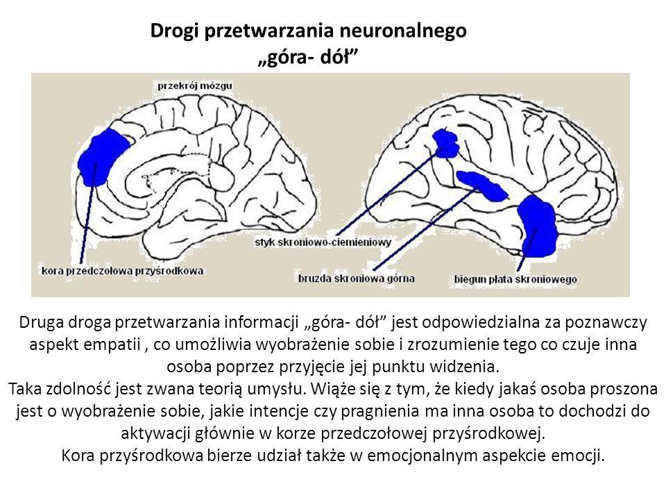 """Drogi przetwarzania neuronalnego """"góra- dół"""