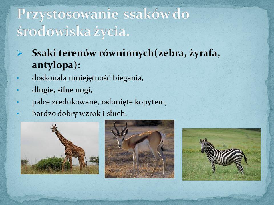 Przystosowanie ssaków do środowiska życia.