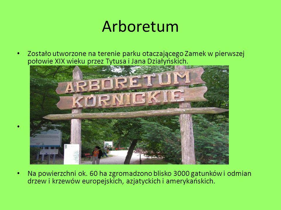 Arboretum Zostało utworzone na terenie parku otaczającego Zamek w pierwszej połowie XIX wieku przez Tytusa i Jana Działyńskich.