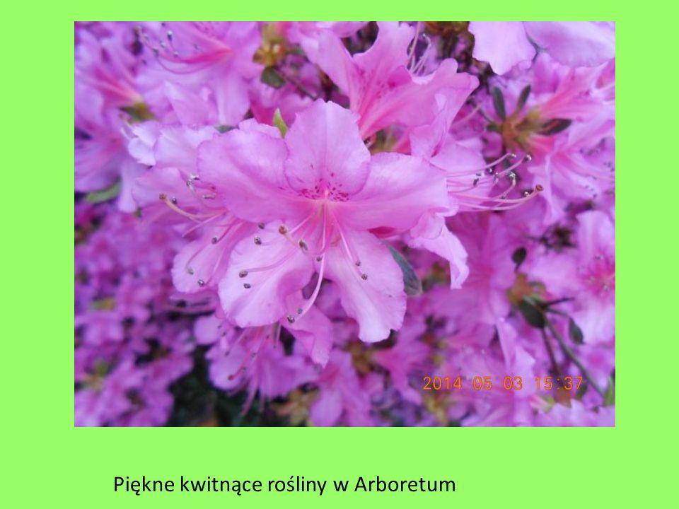 Piękne kwitnące rośliny w Arboretum