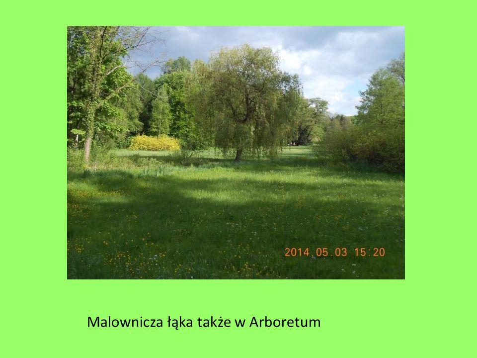 Malownicza łąka także w Arboretum