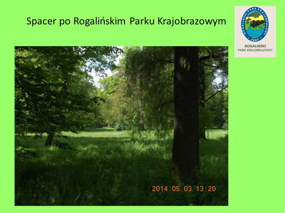 Spacer po Rogalińskim Parku Krajobrazowym