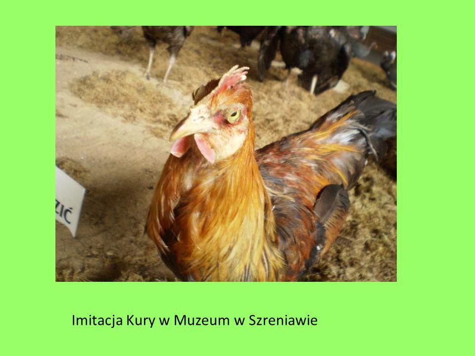 Imitacja Kury w Muzeum w Szreniawie