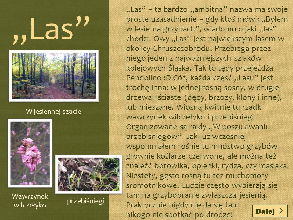 """""""Las – ta bardzo """"ambitna nazwa ma swoje proste uzasadnienie – gdy ktoś mówi: """"Byłem w lesie na grzybach , wiadomo o jaki """"las chodzi. Owy """"Las jest największym lasem w okolicy Chruszczobrodu. Przebiega przez niego jeden z najważniejszych szlaków kolejowych Śląska. Tak to tędy przejeżdża Pendolino :D Cóż, każda część """"Lasu jest trochę inna: w jednej rosną sosny, w drugiej drzewa liściaste (dęby, brzozy, klony i inne), lub mieszane. Wiosną kwitnie tu rzadki wawrzynek wilczełyko i przebiśniegi. Organizowane są rajdy """"W poszukiwaniu przebiśniegów . Jak już wcześniej wspomniałem rośnie tu mnóstwo grzybów głównie koźlarze czerwone, ale można też znaleźć borowika, opieńki, rydza, czy maślaka. Niestety, gęsto rosną tu też muchomory sromotnikowe. Ludzie często wybierają się tam na grzybobranie zwłaszcza jesienią. Praktycznie nigdy nie da się tam nikogo nie spotkać po drodze!"""