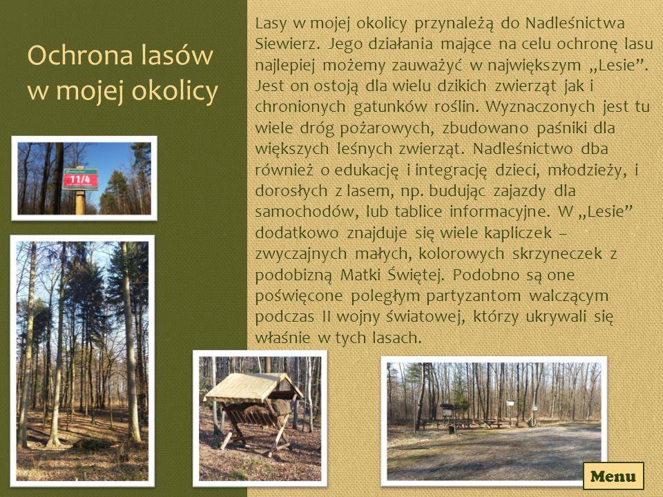 Ochrona lasów w mojej okolicy