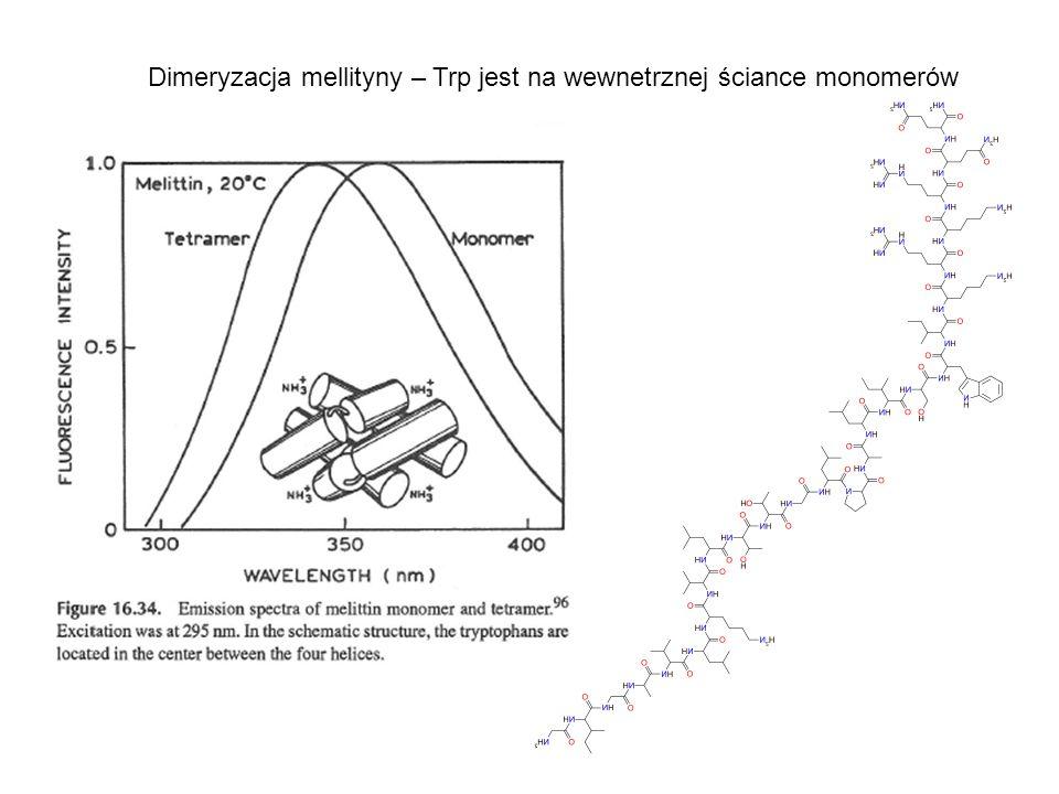 Dimeryzacja mellityny – Trp jest na wewnetrznej ściance monomerów