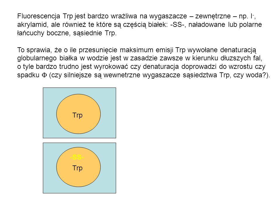 Fluorescencja Trp jest bardzo wrażliwa na wygaszacze – zewnętrzne – np