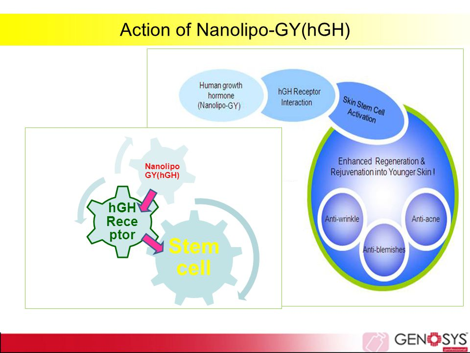 Action of Nanolipo-GY(hGH)