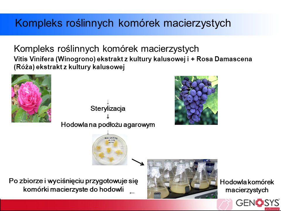 Hodowla na podłożu agarowym Hodowla komórek macierzystych