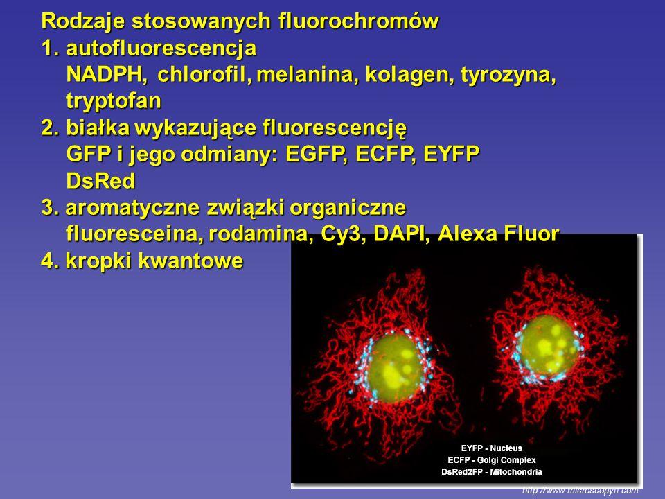 Rodzaje stosowanych fluorochromów