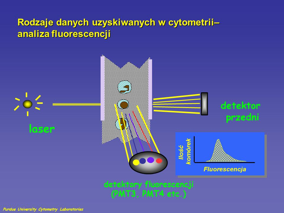 detektory fluorescencji