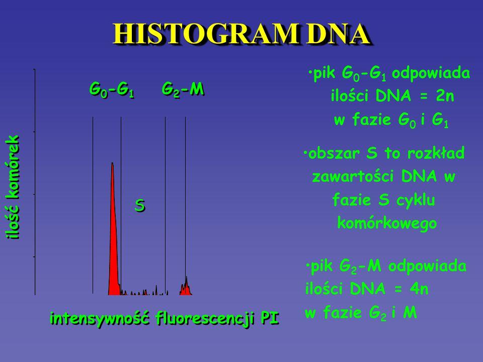 HISTOGRAM DNA pik G0-G1 odpowiada ilości DNA = 2n w fazie G0 i G1