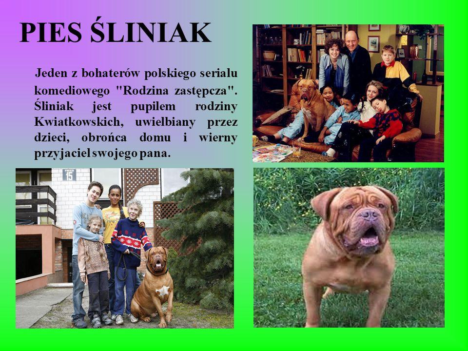 PIES ŚLINIAK