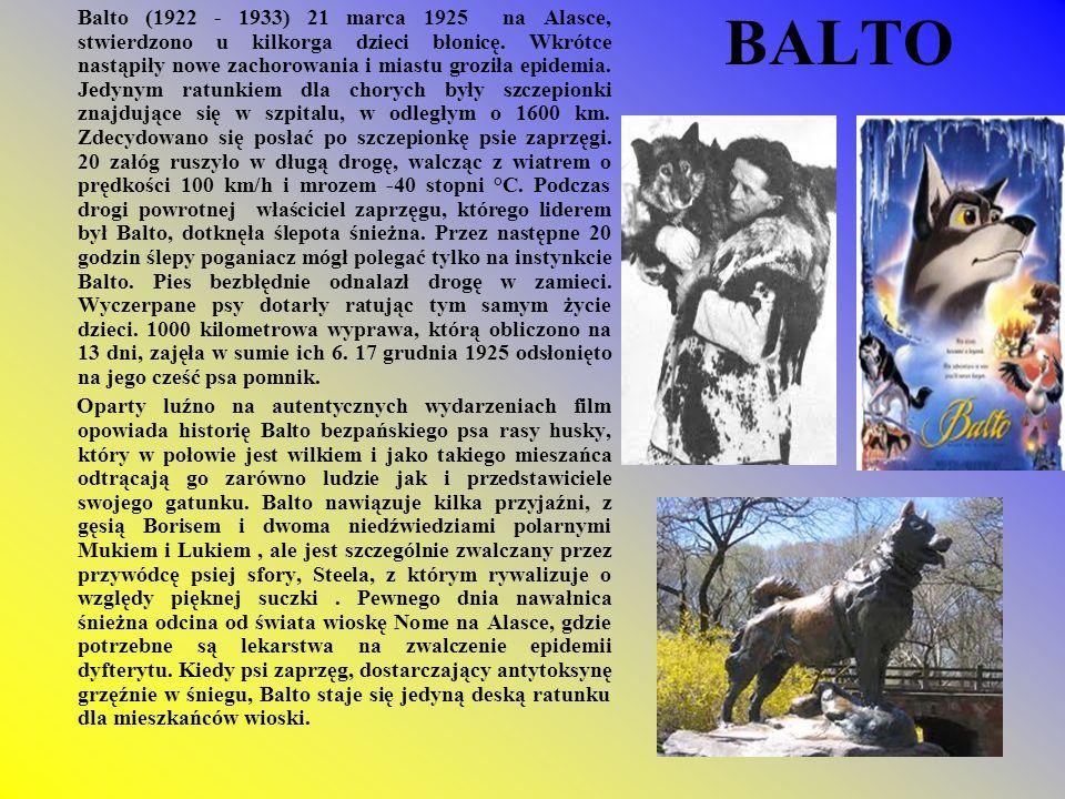 Balto (1922 - 1933) 21 marca 1925 na Alasce, stwierdzono u kilkorga dzieci błonicę. Wkrótce nastąpiły nowe zachorowania i miastu groziła epidemia. Jedynym ratunkiem dla chorych były szczepionki znajdujące się w szpitalu, w odległym o 1600 km. Zdecydowano się posłać po szczepionkę psie zaprzęgi. 20 załóg ruszyło w długą drogę, walcząc z wiatrem o prędkości 100 km/h i mrozem -40 stopni °C. Podczas drogi powrotnej właściciel zaprzęgu, którego liderem był Balto, dotknęła ślepota śnieżna. Przez następne 20 godzin ślepy poganiacz mógł polegać tylko na instynkcie Balto. Pies bezbłędnie odnalazł drogę w zamieci. Wyczerpane psy dotarły ratując tym samym życie dzieci. 1000 kilometrowa wyprawa, którą obliczono na 13 dni, zajęła w sumie ich 6. 17 grudnia 1925 odsłonięto na jego cześć psa pomnik.