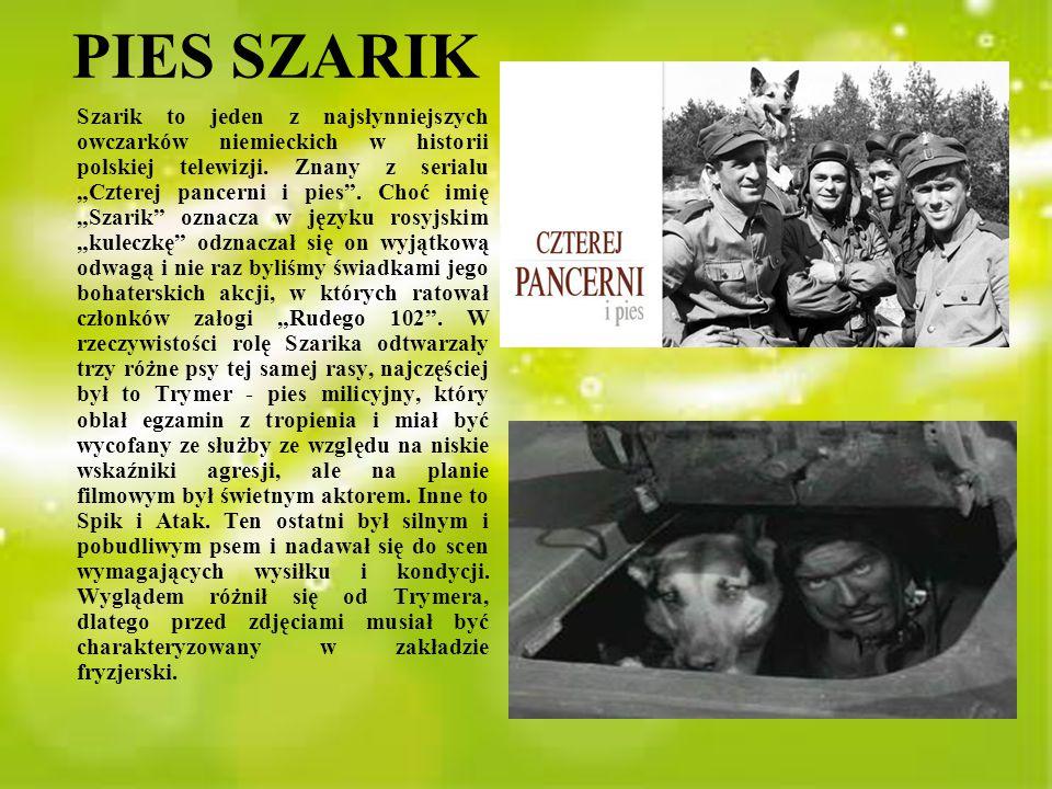 PIES SZARIK
