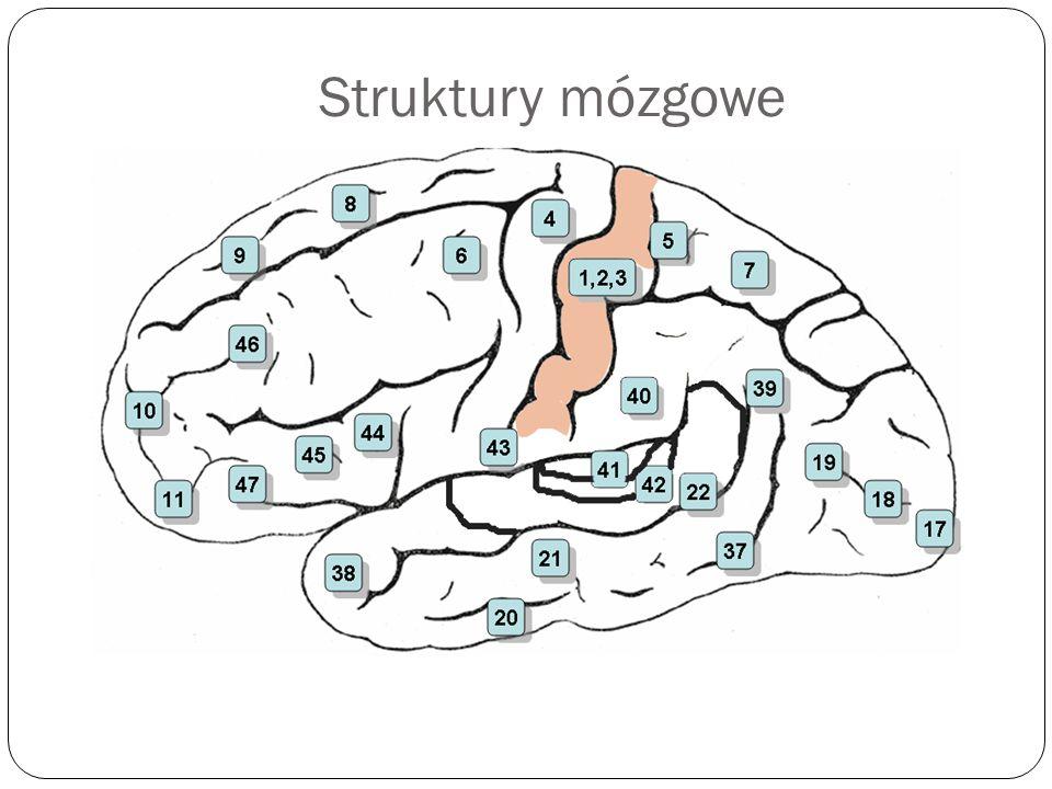 Struktury mózgowe